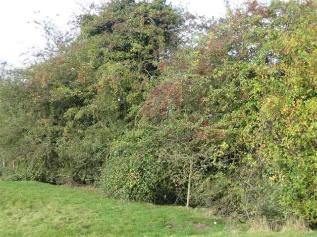 Image result for species rich hedgerow