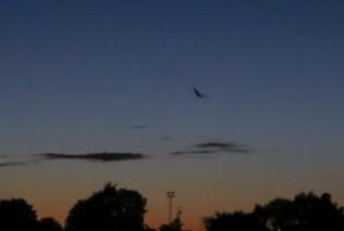 News - Bat walk 2