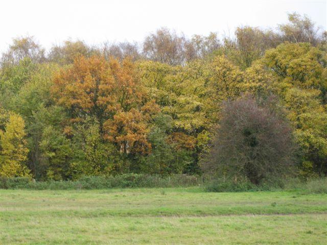 Trees - copse