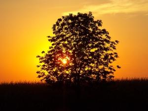 sunset-235574_640