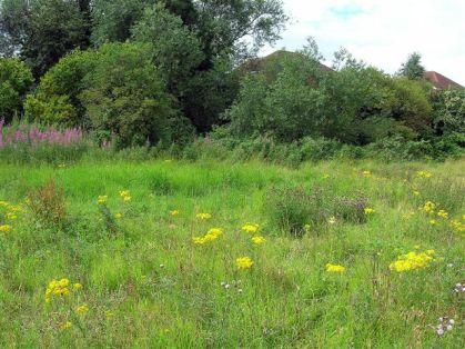 Flowers - Little Hob Moor, General View