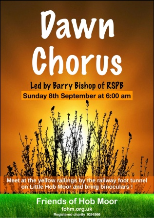 FOHM dawn_chorus 080919